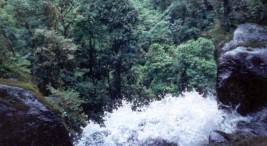 Imagen con fines ilustrativos tomada de ecosistemasdecostarica.blogspot.com