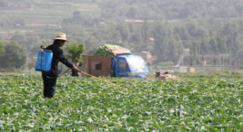 epidemia-de-nefropatia-mesoamericana
