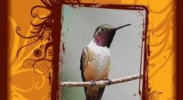 caminata ornitologica
