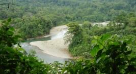 Imagen tomada de www.cahuitainfo.com