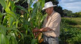 UCR Expertos presentan ideas para fortalecer agronegocios en Latinoamerica