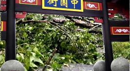 Imagen tomada de www.feconcr.org