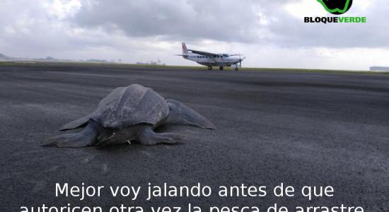 La tortuga voladora