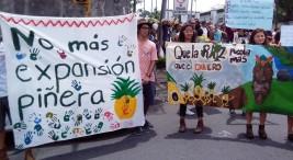 A proposito de un reciente reportaje sobre la pina costarricense difundido por la DW en Alemania