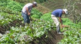 Foto del Ministerio de Agricultura y Ganadería.