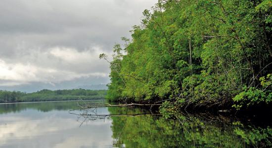 UCR Manglares escudos naturales en riesgo