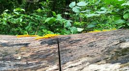 Megaproyecto del Paacume afectara a la unica reserva biologica de bosque tropical seco del pais