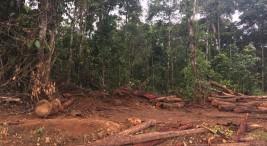 Presunta deforestacion ilegal dentro del Refugio Maquenque y la Trocha Fronteriza