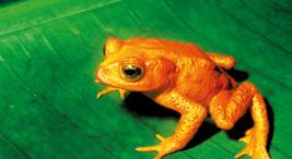 UCR La sexta extincion masiva de los organismos será provocada por el ser humano