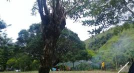70 indigenas proceden con recuperacion de una extensa finca en Rey Curre2