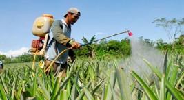 UCR Trabajadores de plantaciones buscan reivindicacion de sus derechos laborales